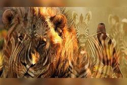 Bạn nhìn thấy sư tử hay ngựa vằn? Câu trả lời tiết lộ bí mật ẩn giấu trong tính cách của bạn