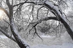 Sương muối tạo băng tuyết trắng xóa ở Trung Quốc