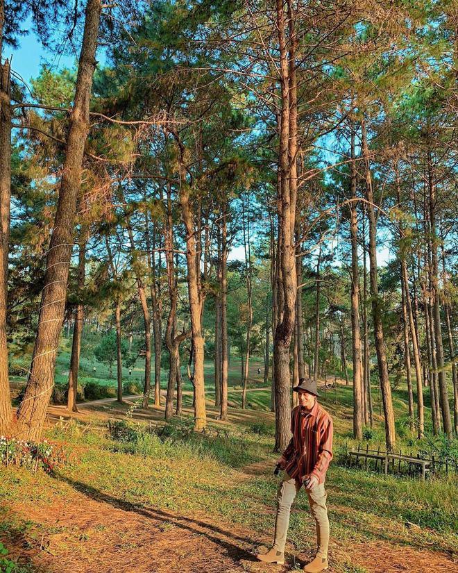 Chỉ muốn xách balo và đi ngay khi nghe tên 4 khu rừng đẹp xuất sắc này-8