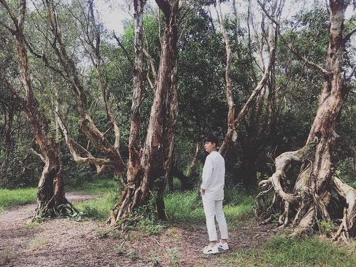Chỉ muốn xách balo và đi ngay khi nghe tên 4 khu rừng đẹp xuất sắc này-17