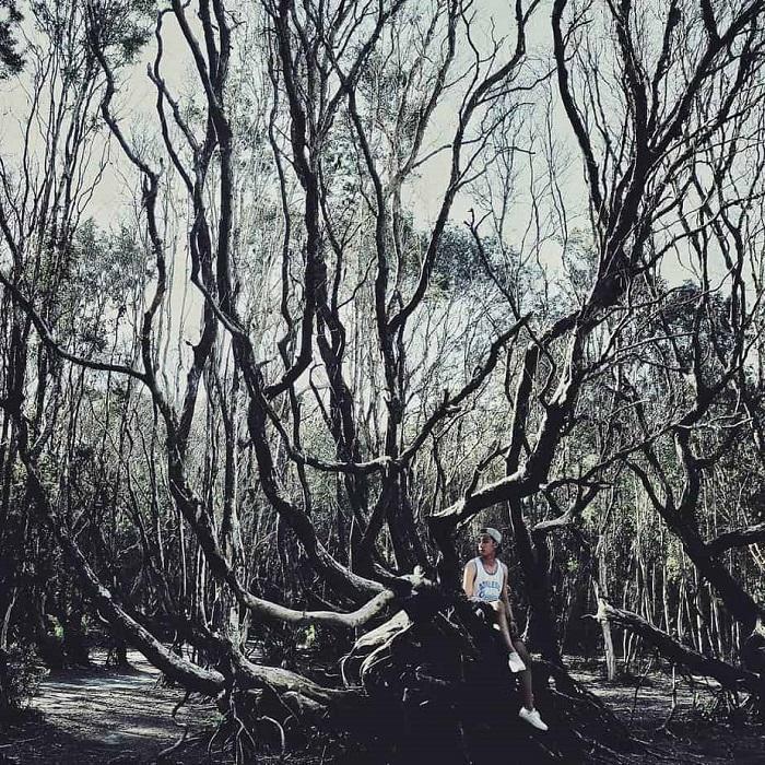 Chỉ muốn xách balo và đi ngay khi nghe tên 4 khu rừng đẹp xuất sắc này-18