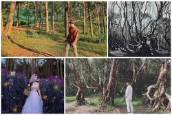 Chỉ muốn xách balo và đi ngay khi nghe tên 4 khu rừng 'đẹp xuất sắc' này