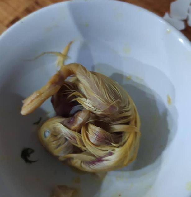 Đi ăn trứng vịt lộn, thanh niên nhát gan vừa nhìn thấy đã hoảng hồn, hận cô bán trứng-2