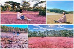 Ngẩn ngơ mùa cỏ hồng Đà Lạt đẹp như tranh vẽ