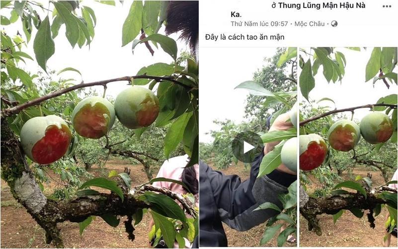Nhóm khách cắn dở vườn táo như chuột gặm ở Hà Nội, còn để lại bút tích trêu ngươi-3
