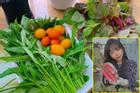 Nàng dâu Việt ở Hàn 'mát tay' trồng đủ loại rau củ xanh rì trên góc ban công vỏn vẹn 3m vuông