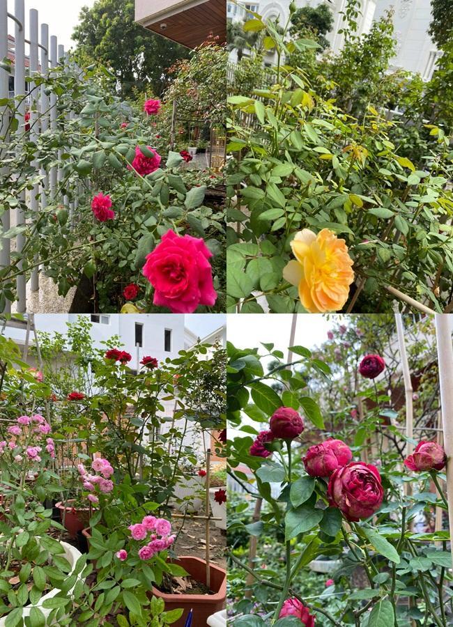 Biệt thự sang chảnh ngập sắc hoa của Quý Bình và vợ đại gia-7