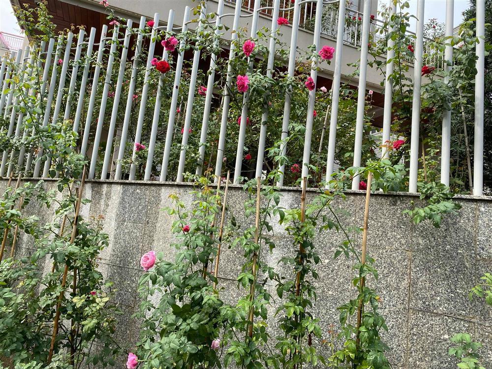 Biệt thự sang chảnh ngập sắc hoa của Quý Bình và vợ đại gia-4
