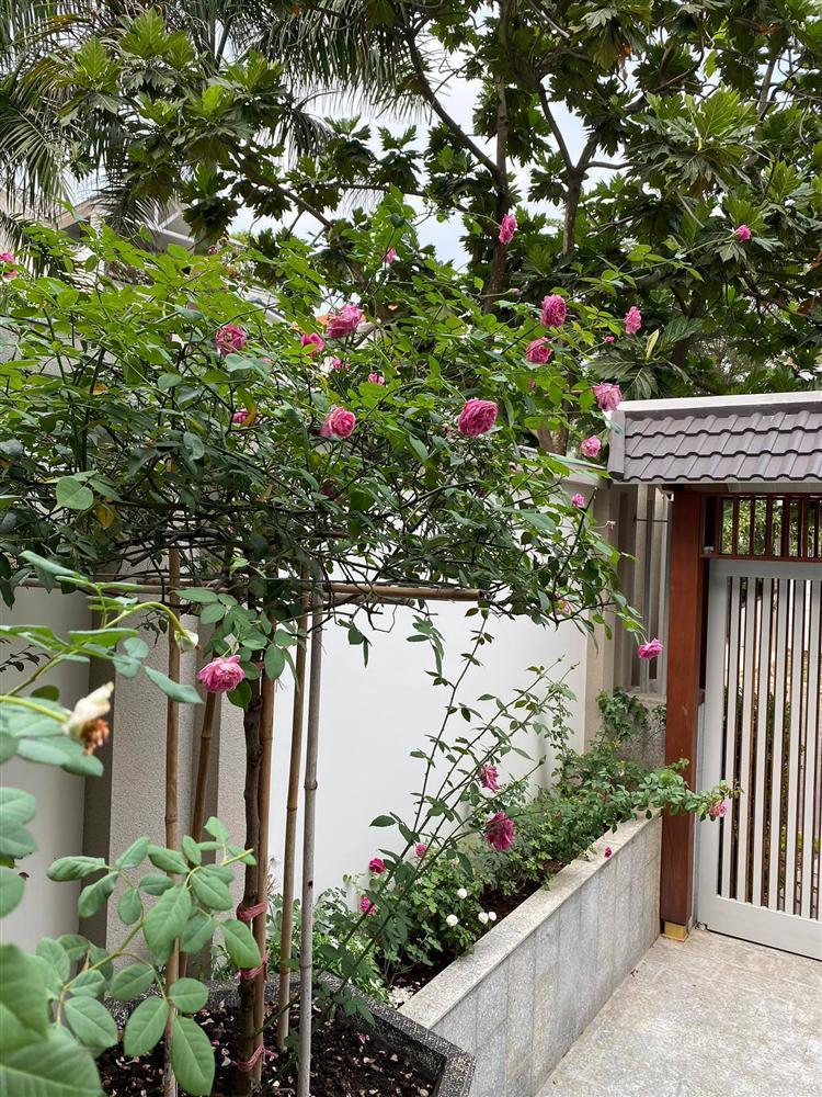Biệt thự sang chảnh ngập sắc hoa của Quý Bình và vợ đại gia-10