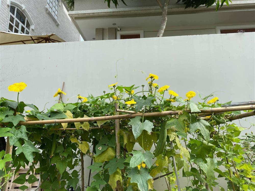 Biệt thự sang chảnh ngập sắc hoa của Quý Bình và vợ đại gia-15