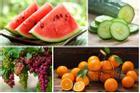 Mẹo hay bảo quản 5 loại hoa quả luôn được tươi lâu