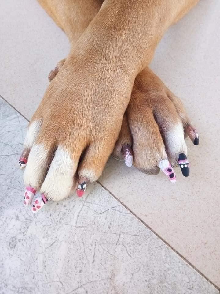 Chú chó làm nail đón Tết, biểu cảm sang chảnh gây cười nghiêng ngả-2
