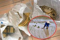 Đi làm quần quật ngoài đồng, ở nhà trộm vào 'khoắng' sạch tiền, vàng trị giá 600 triệu