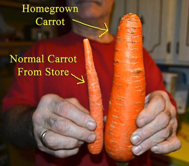 Thực tế chứng minh, đừng bao giờ háo hức mong chờ vào đồ ăn bạn mua qua hình minh họa-13