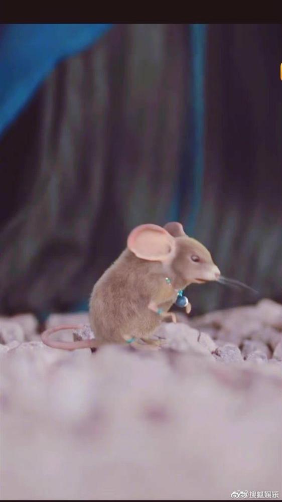 Triệu Lệ Dĩnh lên số 1 hot search nhờ... một chú chuột-1