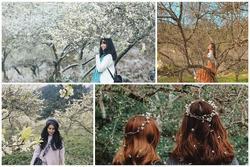 Những điểm check-in hoa mận trắng nở cực đẹp ở Mộc Châu vào mùa này