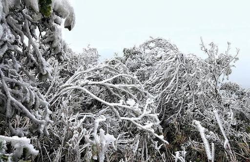 Thử một lần chịu rét để ngắm những thiên đường băng tuyết cực đẹp ở Việt Nam-10