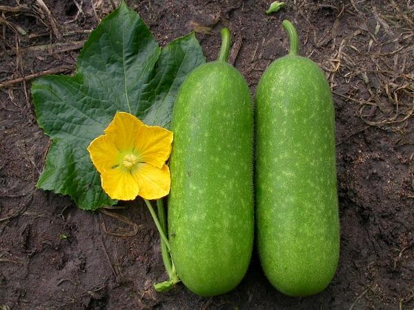 Những loại quả mà bấy lâu nay nhiều người lầm tưởng thuộc họ rau củ-1