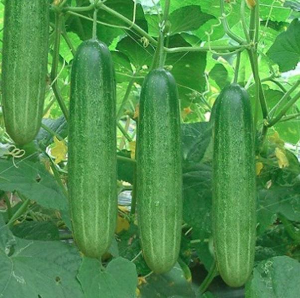 Những loại quả mà bấy lâu nay nhiều người lầm tưởng thuộc họ rau củ-5
