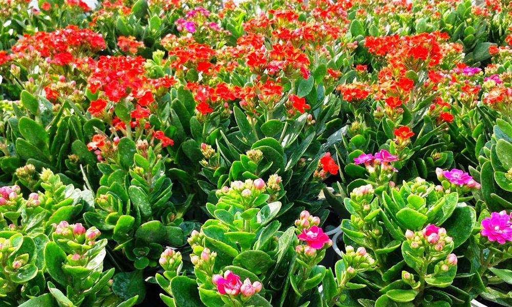 Năm 2021, 12 con giáp nên trồng cây phong thủy gì để vượng phát tài lộc?-12