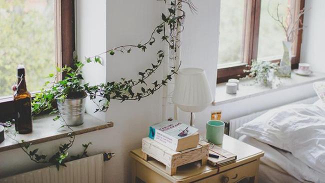 Lựa chọn cây phong thủy bài trí trong nhà, xua tà khí, mang lại may mắn cho gia chủ-4