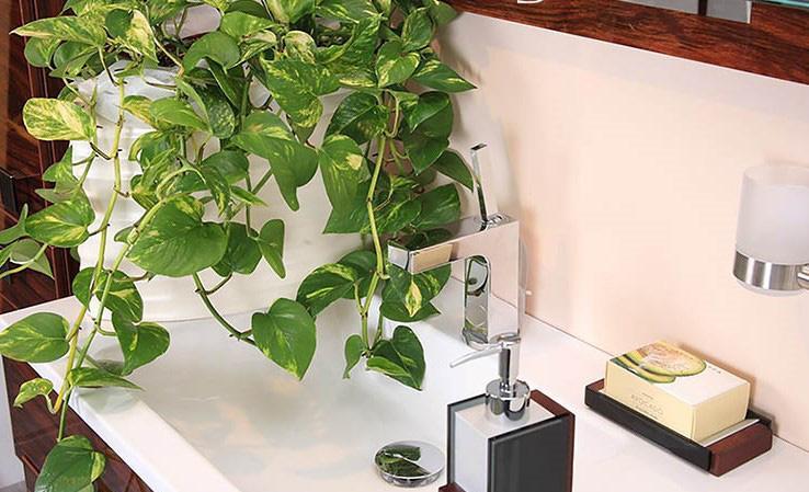 Lựa chọn cây phong thủy bài trí trong nhà, xua tà khí, mang lại may mắn cho gia chủ-7