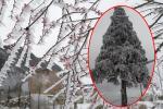 Tuyết rơi trắng trời Y Tý, ai định 'săn tuyết' thì lên đường thôi