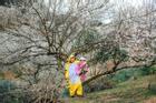 Cặp bạn thân 'cọp vàng - khủng long' vượt ngàn km lên Mộc Châu 'săn' mùa hoa mơ đẹp như bài thơ