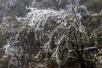 Cảnh tượng băng tuyết bao phủ đèo Ô Quy Hồ