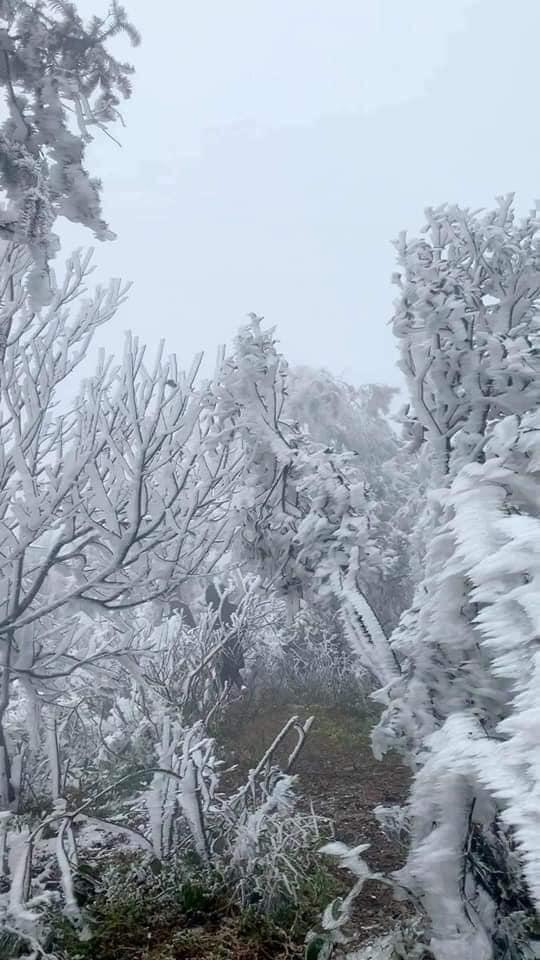Loạt ảnh tuyết rơi trắng xóa tựa trời Âu tại các điểm du lịch Tây Bắc khiến dân tình phát sốt-4
