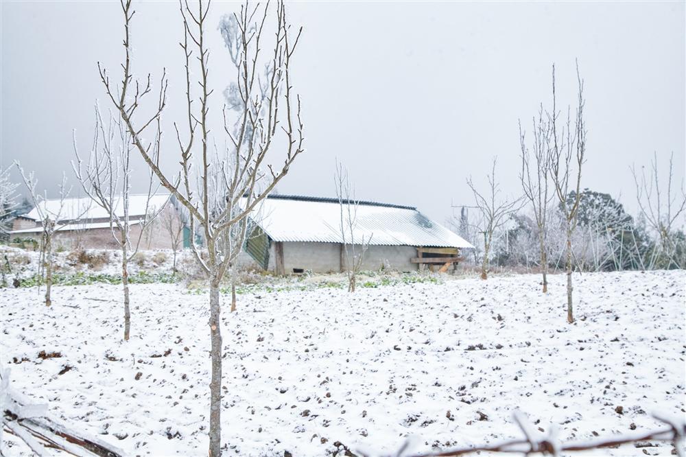 Loạt ảnh tuyết rơi trắng xóa tựa trời Âu tại các điểm du lịch Tây Bắc khiến dân tình phát sốt-7