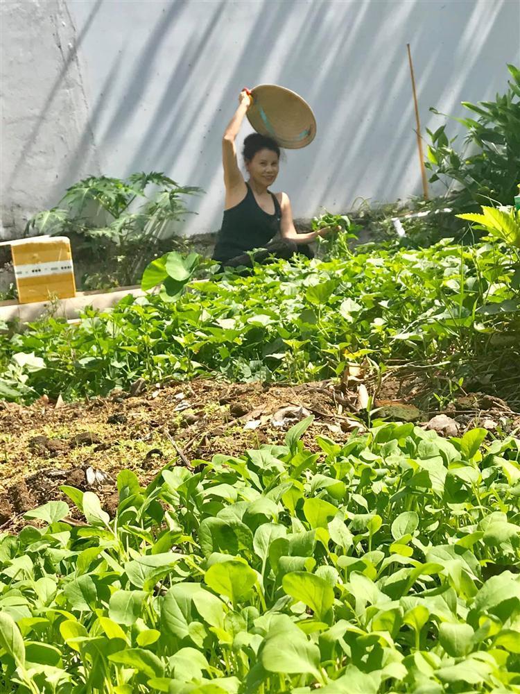 Bố mẹ Hồ Ngọc Hà làm nông dân cuốc đất dù giàu nứt đố đổ vách-6