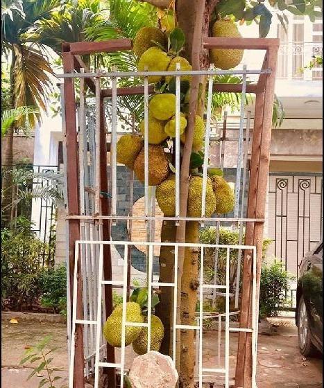 Series chống trộm trái cây chẳng khác gì thiên la địa võng thách thức kẻ xấu-5