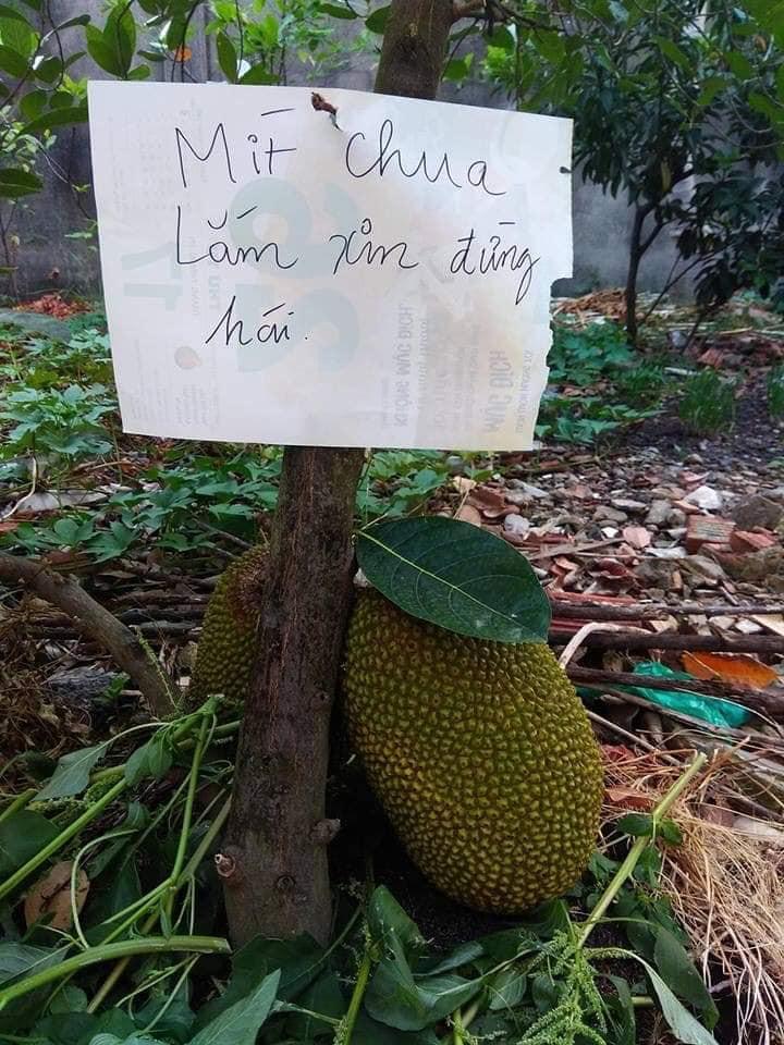 Series chống trộm trái cây chẳng khác gì thiên la địa võng thách thức kẻ xấu-8