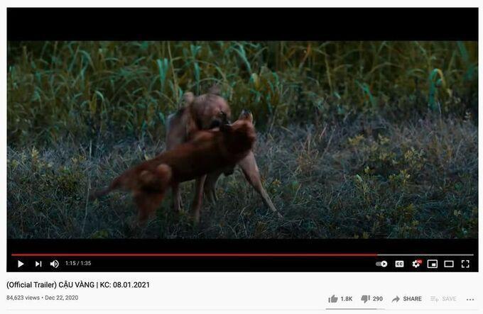 Đạo diễn phim Cậu Vàng: Tôi khẳng định không có chú chó nào chết hay bị thương trên phim-2
