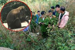 Bắn chết người vì nhầm là khỉ ở Đắk Nông