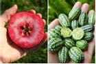 Những loại quả 'lai giống' cực đẹp từ hình dáng đến màu sắc
