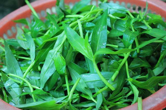 5 loại rau mọc dại ven đường bỗng trở thành đặc sản nổi tiếng-3