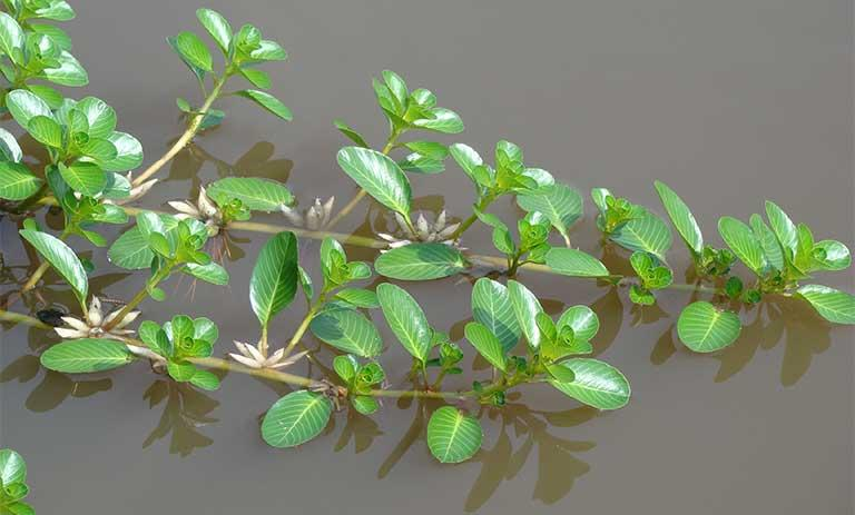 5 loại rau mọc dại ven đường bỗng trở thành đặc sản nổi tiếng-7