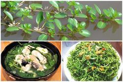 5 loại rau mọc dại ven đường bỗng trở thành đặc sản nổi tiếng