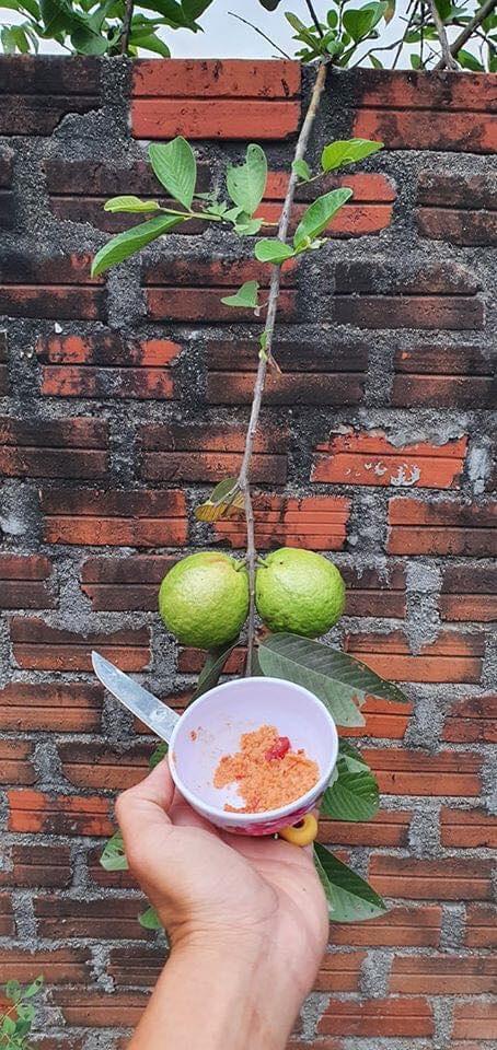 Loạt thảm họa cây nhà trồng, quả hàng xóm hưởng khiến chủ nhân phiền lòng không thôi-8