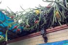 Loạt thảm họa 'cây nhà trồng, quả hàng xóm hưởng' khiến chủ nhân phiền lòng không thôi
