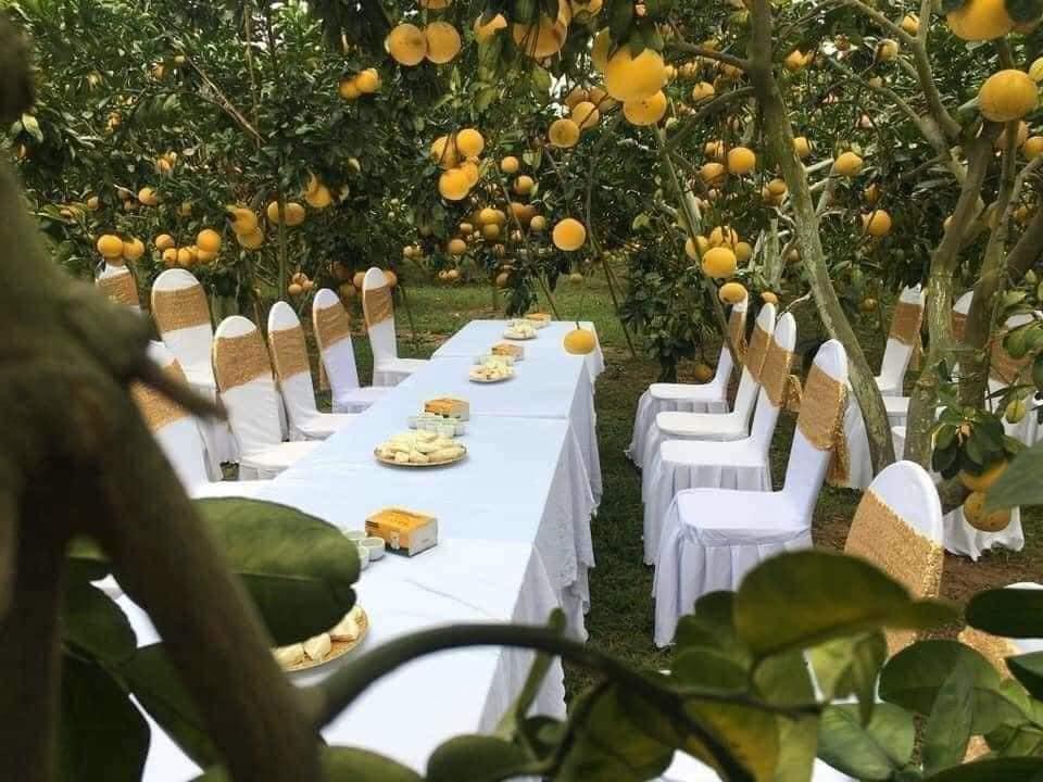 Làm đám cưới trong vườn bưởi trĩu quả, khách muốn ăn cỗ trong bình yên chắc phải đội mũ bảo hiểm-2