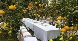Làm đám cưới trong vườn bưởi trĩu quả, khách muốn ăn cỗ trong 'bình yên' chắc phải đội mũ bảo hiểm