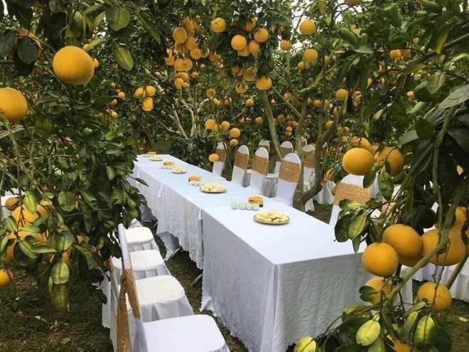Sự thật đằng sau đám cưới trong vườn bưởi sai trĩu quả gây sốt trong những ngày qua-2
