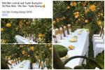 Sự thật đằng sau đám cưới trong vườn bưởi sai trĩu quả gây sốt trong những ngày qua