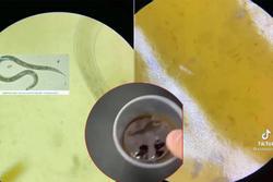 Rùng mình xem clip soi tương ớt vỉa hè dưới kính hiển vi
