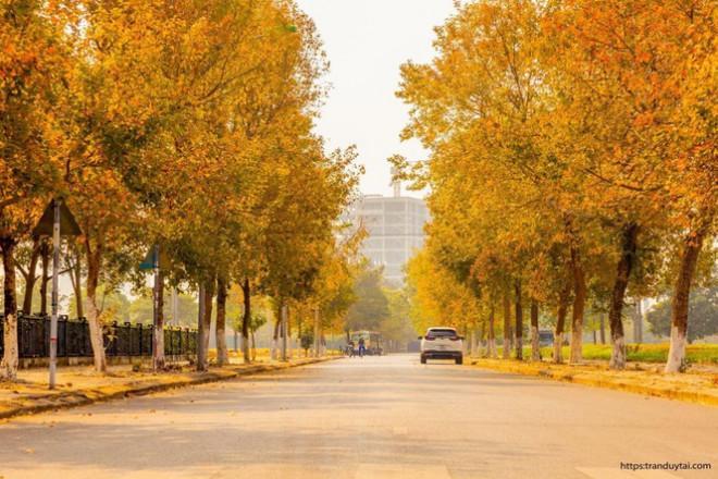 Con đường lá phong đỏ mệnh danh Seoul giữa lòng Hà Nội: Ảnh thực tế khác xa!-1