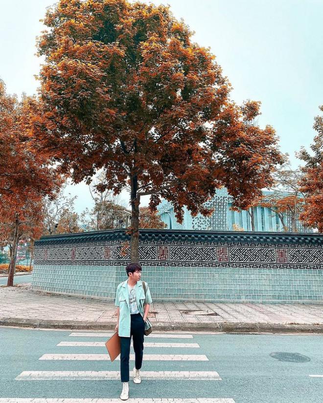 Con đường lá phong đỏ mệnh danh Seoul giữa lòng Hà Nội: Ảnh thực tế khác xa!-2
