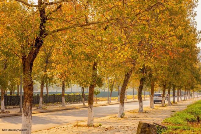 Con đường lá phong đỏ mệnh danh Seoul giữa lòng Hà Nội: Ảnh thực tế khác xa!-4